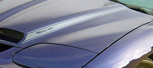 Blackbird hood scoop stripe decals graphics fit Pontiac Firebird